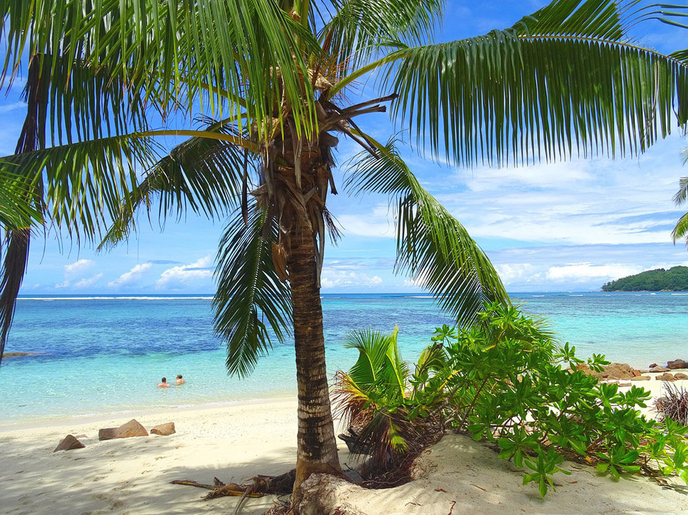 Beach Palm Tree Ocean Free Jigsaw Puzzles Online