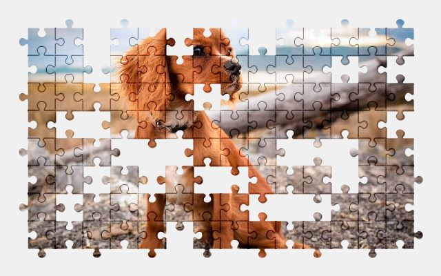 free jigsaw puzzle online adorable,animal,cute,dog,pet