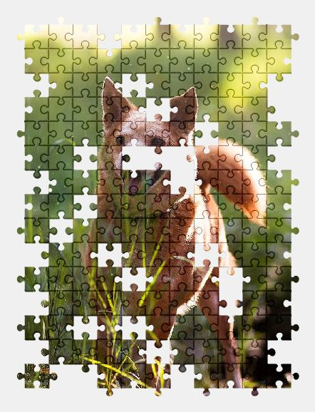 free jigsaw puzzle online animal,cute,dog,grass,pet,forest