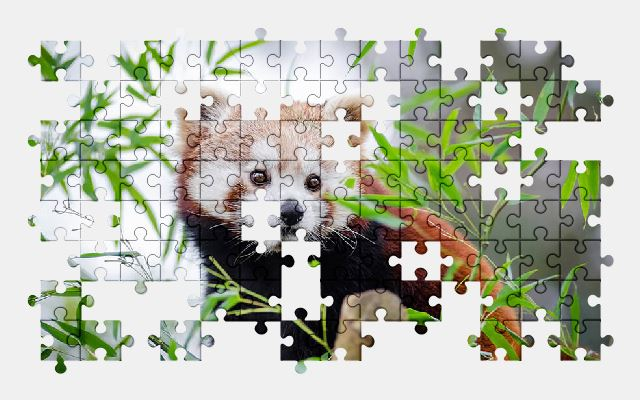 free jigsaw puzzle online adorable,animal,cute,leaves,red-panda