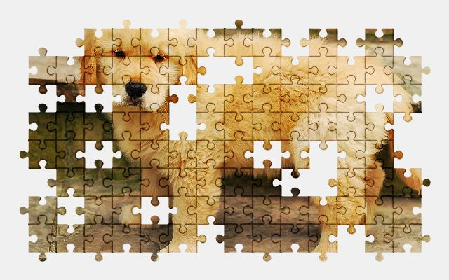 free jigsaw puzzle online cute,animal,dog,pet