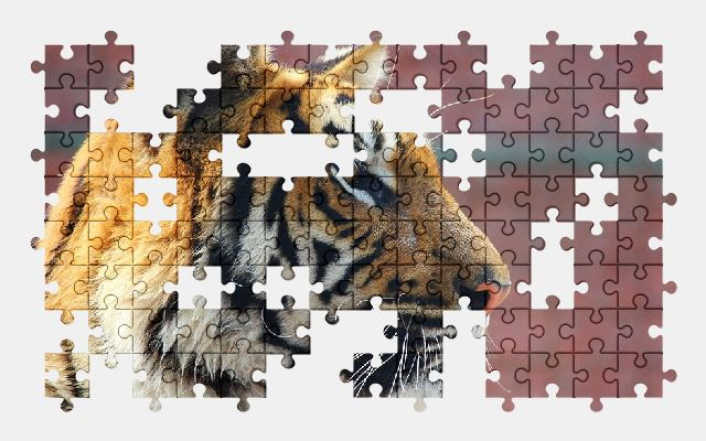free jigsaw puzzle online tiger,animal,big-cat