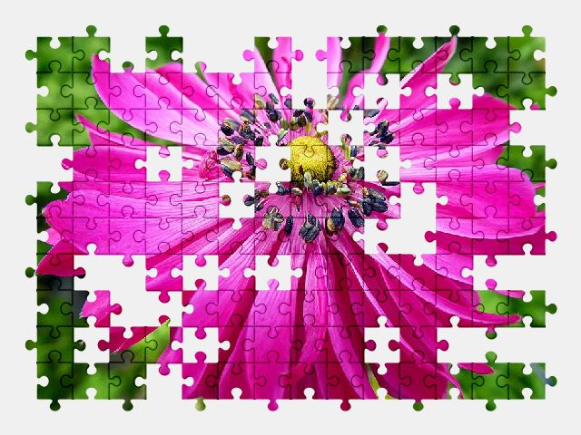 free jigsaw puzzle online flower,spring,pink,nature