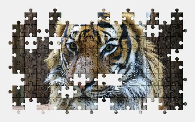 free jigsaw puzzle online animal,tiger