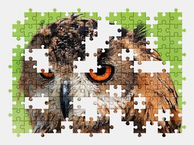 free jigsaw puzzle online animal,bird,nature,owl