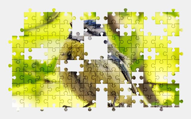 free jigsaw puzzle online animal,bird,branch,tropical,nature
