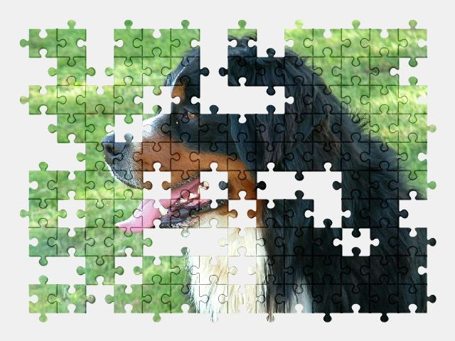 free jigsaw puzzle online animal,dog