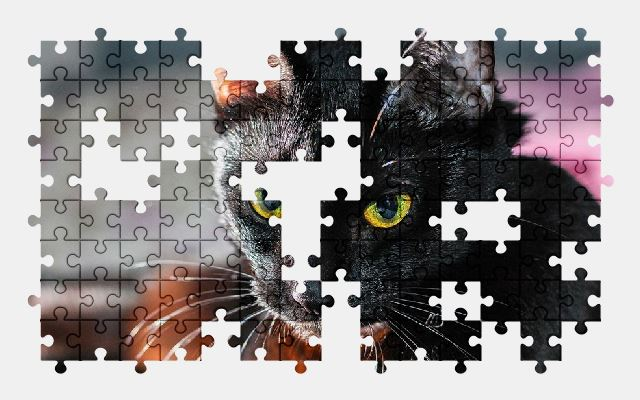 free jigsaw puzzle online animal,black,cat,pet