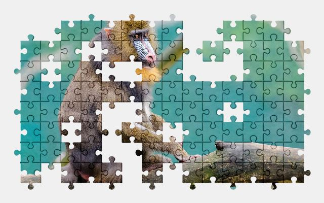 free jigsaw puzzle online animal,branch,cute,monkey,primate