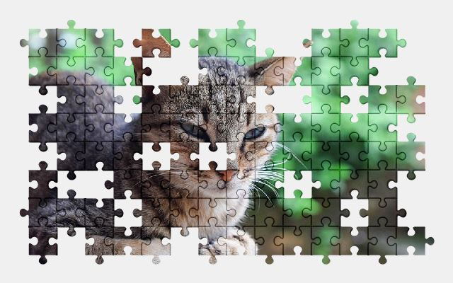 free jigsaw puzzle online animal,cat,pet,cute,kitten,funny