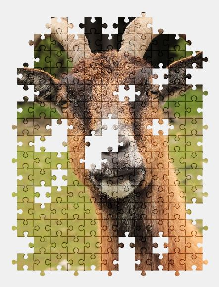 free jigsaw puzzle online animal,goat