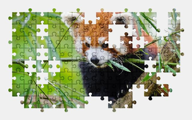 free jigsaw puzzle online animal,cute,grass,red-panda