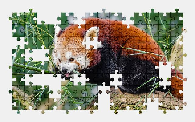 free jigsaw puzzle online animal,cute,red-panda,wildlife