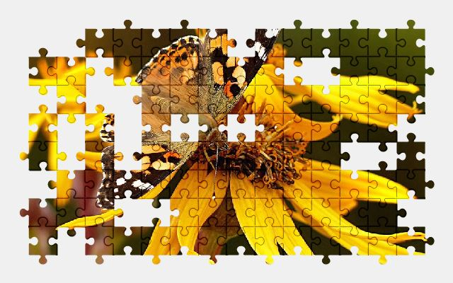 free jigsaw puzzle online insect,butterfly,flower,nature