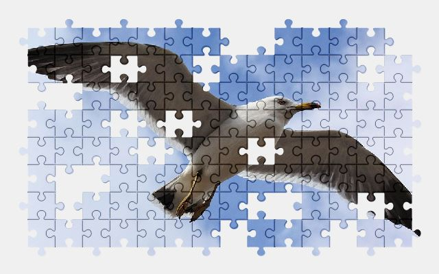 free jigsaw puzzle online animal,sky,cloud,seagull,bird