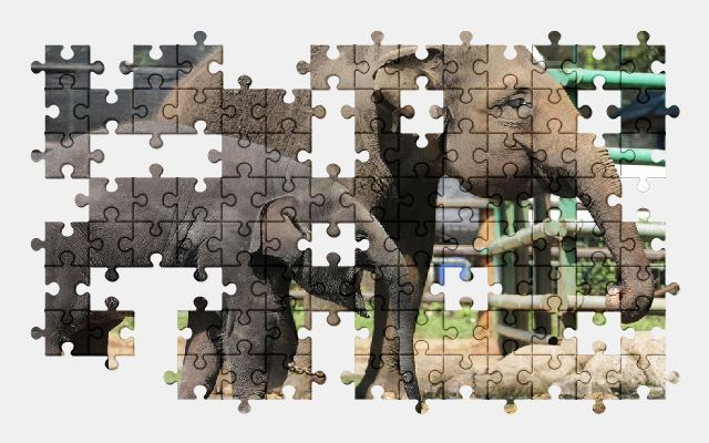 free jigsaw puzzle online animal,elephant,nature,zoo