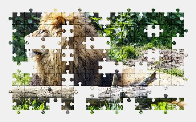 free jigsaw puzzle online animal,lion,zoo