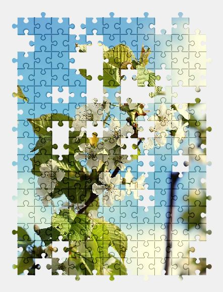 free jigsaw puzzle online apple,branch,bloom