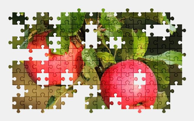 free jigsaw puzzle online apple,food,branch,nature,tree,fruit