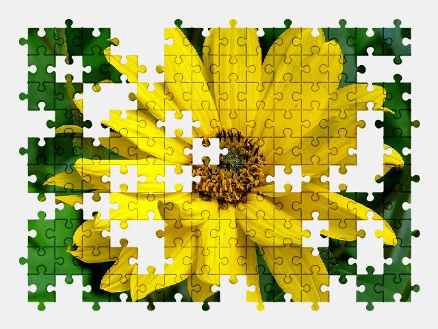 free jigsaw puzzle online yellow,flower,nature