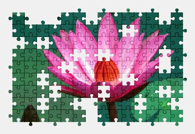 free jigsaw puzzle online water-lily,pink,flower,nature