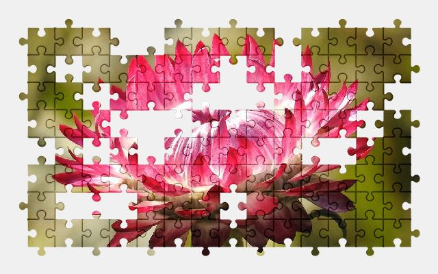 free jigsaw puzzle online autumn,flower,blossom,bloom,nature