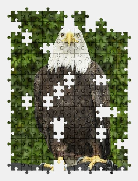 free jigsaw puzzle online eagle,bird,nature,animal