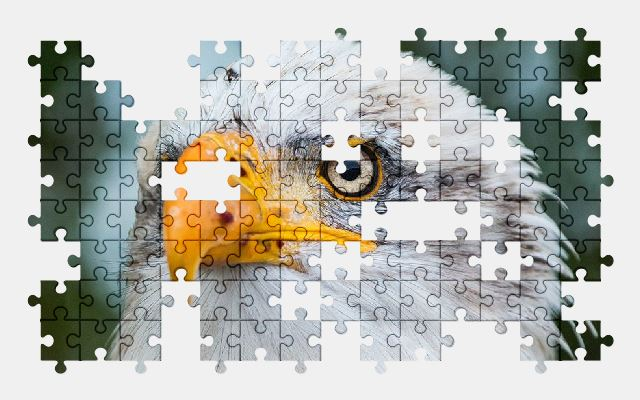 free jigsaw puzzle online eagle,bird,animal,nature