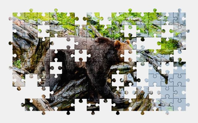 free jigsaw puzzle online bear,nature,animal