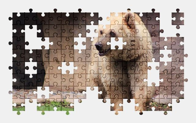 free jigsaw puzzle online bear,animal,nature,zoo,cute
