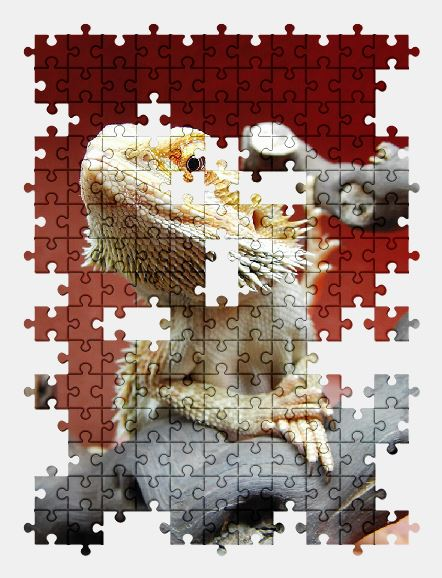 free jigsaw puzzle online reptile,animal