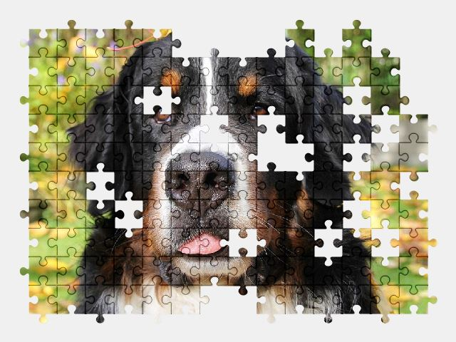 free jigsaw puzzle online dog,autumn,animal,pet