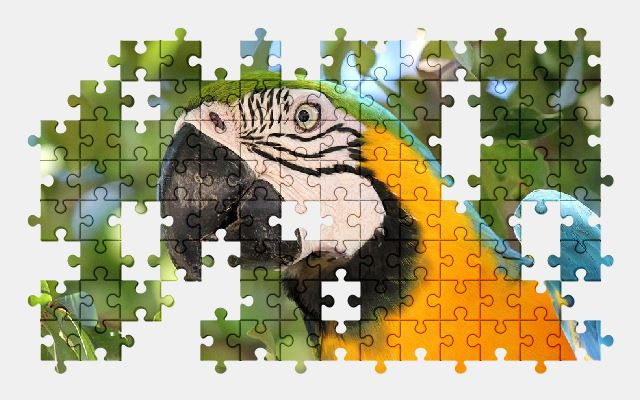 free jigsaw puzzle online bird,nature,animal