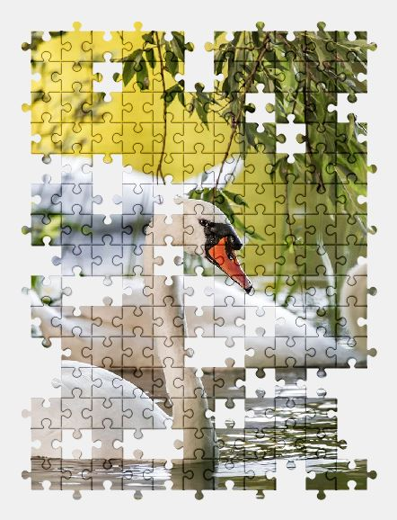 free jigsaw puzzle online bird,nature,river,swan,water,animal,birds