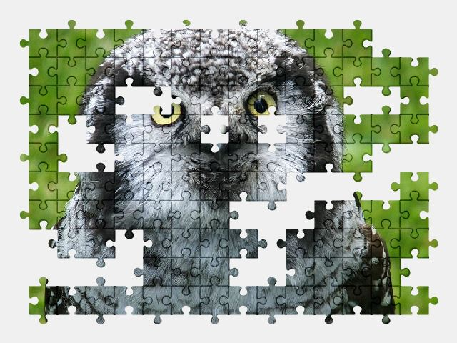 free jigsaw puzzle online bird,nature,owl,animal