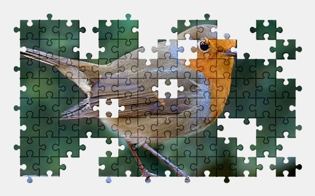 free jigsaw puzzle online bird,robin,animal,nature
