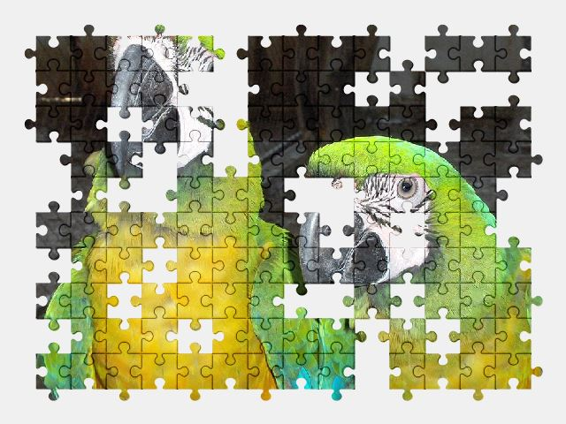 free jigsaw puzzle online bird,tropical,animal,thailand,parrot
