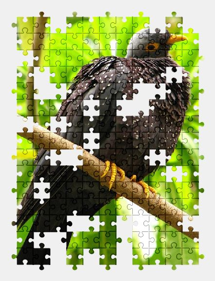 free jigsaw puzzle online bird,nature