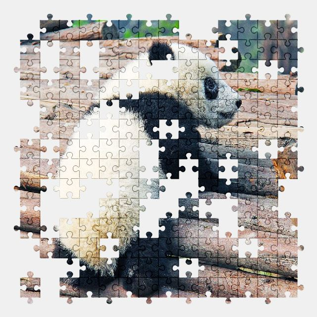 free jigsaw puzzle online adorable,animal,panda,nature