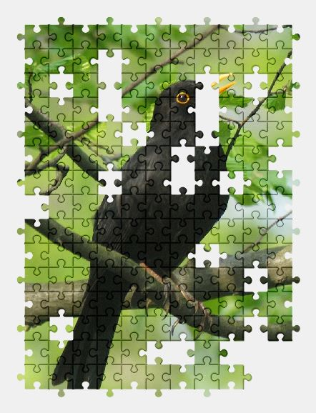 free jigsaw puzzle online bird,spring,black,animal,nature