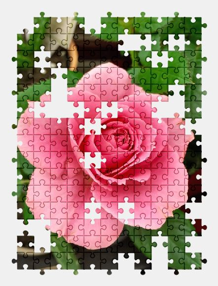 free jigsaw puzzle online flower,nature,rose