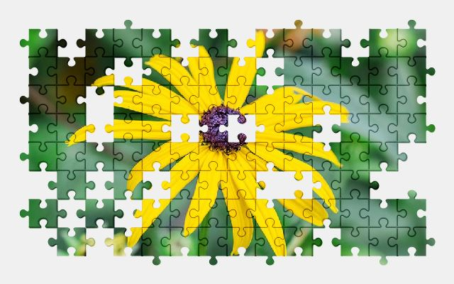 free jigsaw puzzle online bloom,yellow,flower,nature,summer,blossom,spring