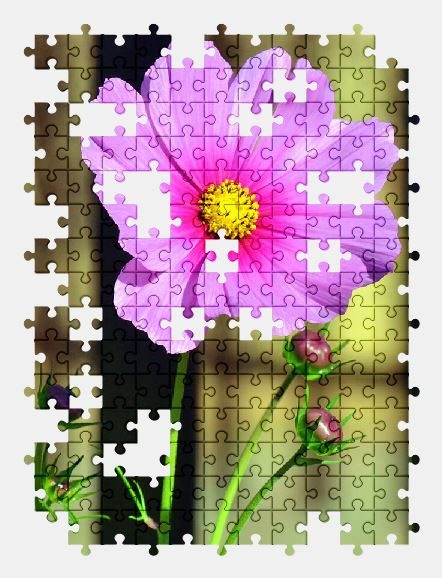 free jigsaw puzzle online spring,pink,flower