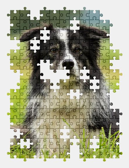 free jigsaw puzzle online dog,animal,pet,nature,adorable