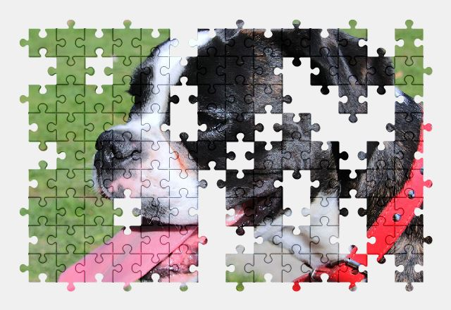 free jigsaw puzzle online boxer,dog,animal,pet