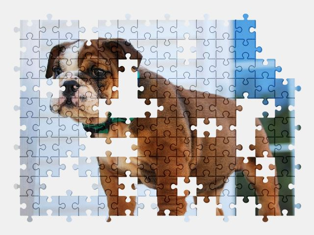 free jigsaw puzzle online bulldog,puppy,dog,animal,cute,pet