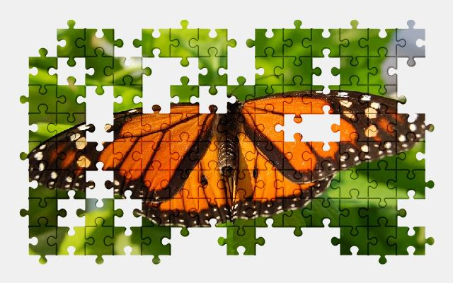 free jigsaw puzzle online butterfly,animal