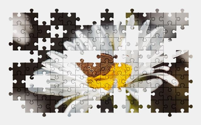 free jigsaw puzzle online butterfly,flower,nature
