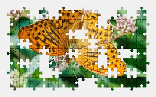 free jigsaw puzzle online butterfly,nature,flower