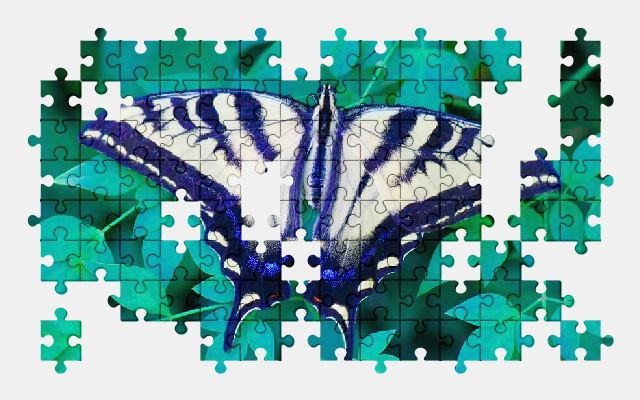 free jigsaw puzzle online butterfly,nature